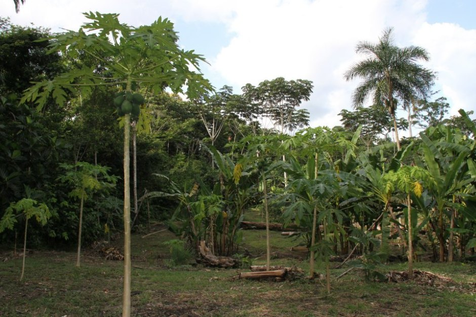 Tropical Permaculture farm in Amazon